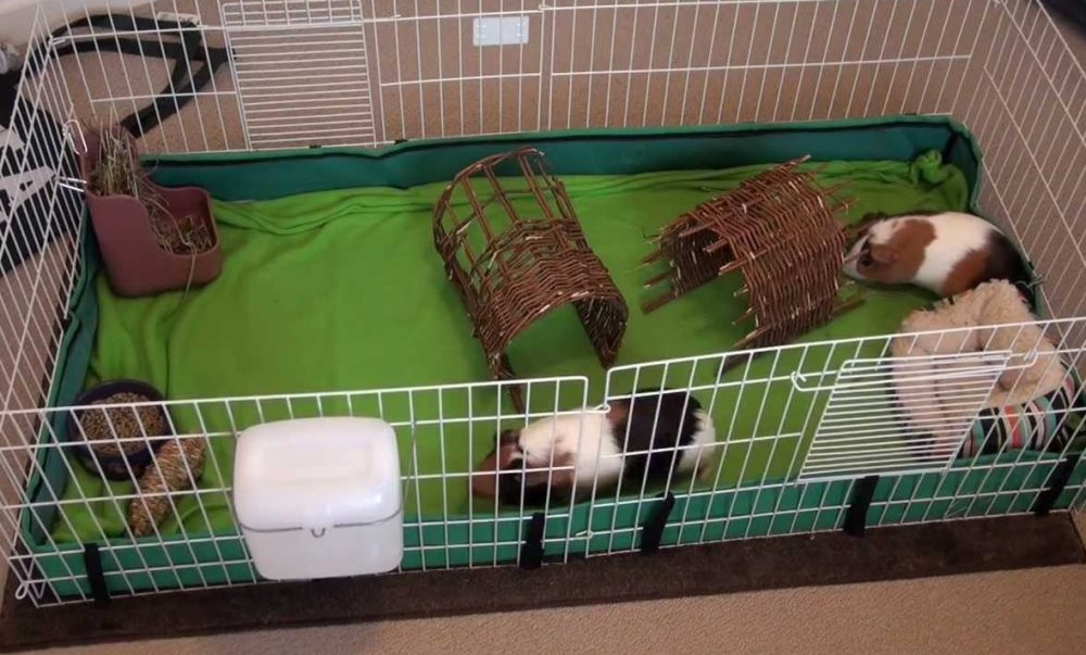 Cage For Guinea Pigs